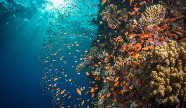 987_orange-anthias-on-reef